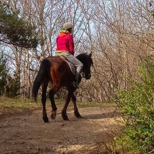 a cavall per la vall de ribes